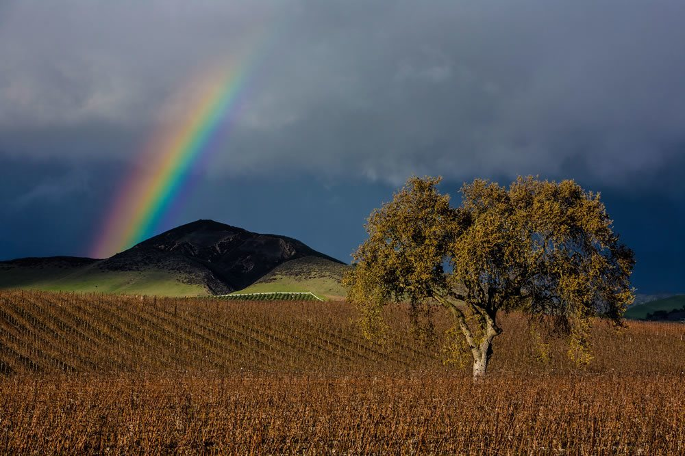 Seller Articles